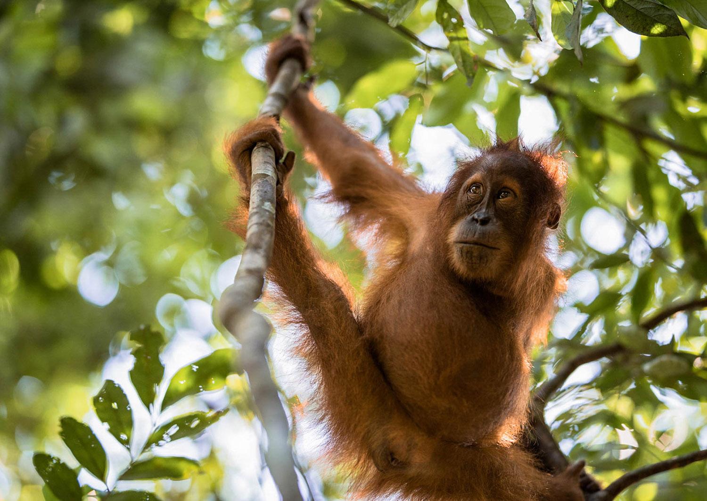 Co warto zobaczyć w Indonezji - bukit lawang - blog podróżniczy